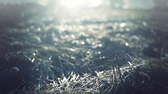 Cinemagraphs / Animated photography - In The Fields on Behance