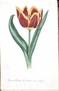 Vintage botanical printables--want to watercolor it.