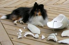 Animals Misbehaving  #funny #pets #cute #hilarious