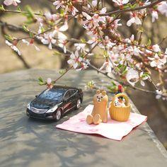 흩날리는 #앵두나무 #꽃 잎을 바라보며 즐기는 #봄소풍 어떠세요?  What about enjoying the #spring #picnic and #shower of #blossoms ?  #Hyundai #Motor #Grandeur #Azera #car #toy #fun #cherry #flower #date #travelling #daily #현대자동차 #그랜저 #창덕궁 #도시락 #소풍 #데이트 #일상 #데일리 #자동차 #자동차그램 #소소잼