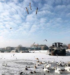 В Кракове уже неделю стоят морозы ❄❄❄ город завалило снегом и даже бедная Висла замёрзла✨