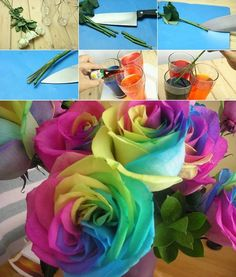 In three different glasses add your favourite food colours and then cut the bottom of the stem in three. The cut should be around 3-4 cm, enough to reach each of the glasses. Let the roses there for 2-3 days and your rainbow roses will be ready! Note: In some of the roses you can see the colour change within the first hour, but for a better result the stronger the colours. Have fun trying this!