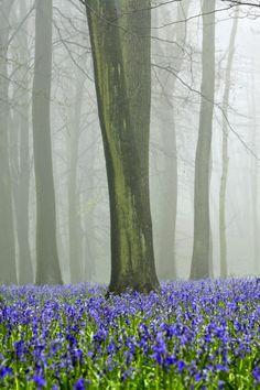 Ashridge Forest Hertfordshire