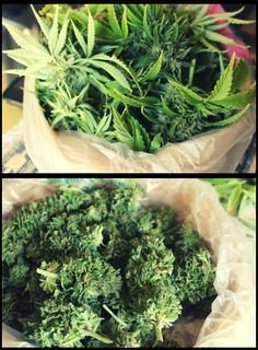 Before - After  #weed #marijuana #cannabis