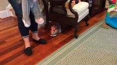 Corgi flees after seeing the baby in an elephant costume