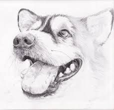 Image Result For Easy Pencil Drawings Of Animals For