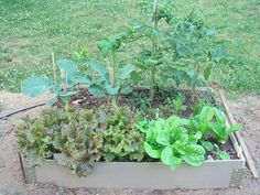 You can grow quite a lot of food very efficiently in a small raised bed which is intensively cultivated.