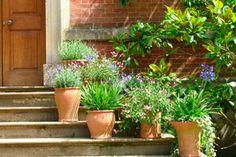 Plantas para atraer buenas energias al hogar. Lista de plantas para armonizar la casa. Cómo atraer prosperidad en el hogar con plantas