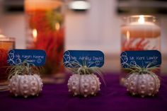 Urchins & airplants Ocean Glamour Inspiration Shoot by Sugar(ed) Event Design and Planning + Becca Borge Photography + Hide and Seek Design  Read more - http://www.stylemepretty.com/florida-weddings/2011/11/18/ocean-glamour-inspiration-shoot-by-sugared-event-design-and-planning-becca-borge-photography-hide-and-seek-design/