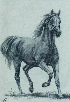 horses – Keep up with the times. Horse Pencil Drawing, Horse Drawings, Pencil Art Drawings, Animal Drawings, Drawing Art, Animal Sketches, Art Sketches, Horse Sketch, Horse Artwork