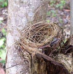 I'd like to try to make a decorative bird nest.http://www.ehow.com/how_5072519_make-artificial-bird-nest.html