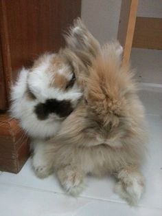 2 close fuzzy buns