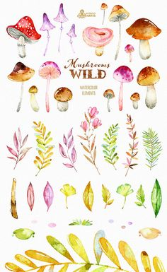 This set of 41 high quality hand painted watercolor Clipart: Mushrooms, leaves, branchs etc). Perfect graphic for invitations, greeting cards, photos, posters, quotes and more.