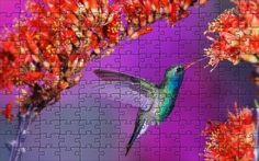 Free Online Jigsaw Puzzles, Hummingbird, Wallpaper, Flowers, Wallpapers, Royal Icing Flowers, Flower, Florals, Wall Papers