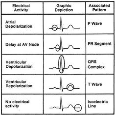 An EKG measures the electrical activity in the heart. This illustrates what is happening on each part of the EKG. This is something that you will need to remember. You won't always see everything in an EKG. Remember.... bigger & stronger wins the race! For example.... the atria repolarize during the QRS, but you will not see that since the impulse from the ventricles is stronger.