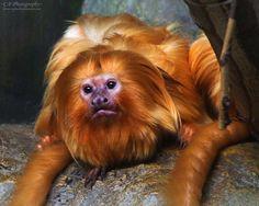 wildlife-animals-13.jpg 500×400 pixels