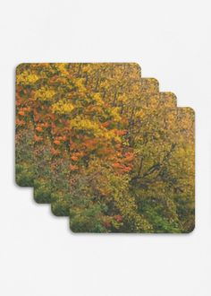 Woods Artwork Por Single Coaster Autumn Klinkhammer Bamboo Vickie Set zw4dRTq