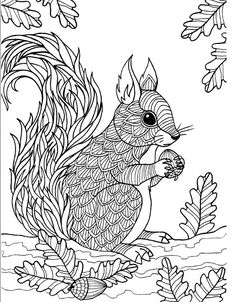 Adult Coloring Pages Squirrel Zentangle Doodle Book