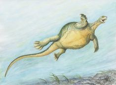 Illustration showing what Eorhynchochelys sinensis may have looked in life by Adrienne Stroup from the Field Museum Sea Turtle Species, Turtle Names, Field Museum, Extinct Animals, Prehistoric Creatures, Ancient Mysteries, Little Monsters, Pets