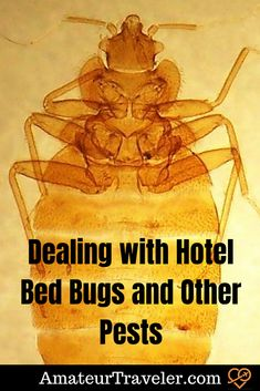 Dealing with Hotel Bed Bugs and Other Pests #travel