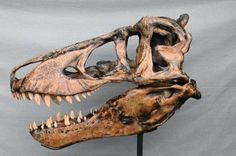 """""""Harley"""" fossil  Replica from the Cretaceous Hell Creek formation, Jordan, Montana. Los Angeles County Museum of Natural History specimen. 53x35x40in"""