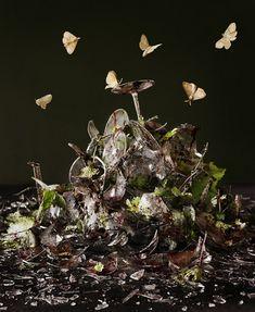 the viscerally powerful still life work of tara sellios