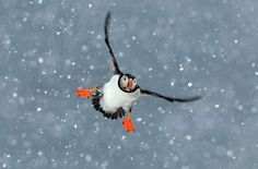 #Bird in flight.