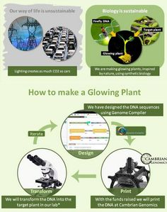 Natural Lighting: Grow Your Own Glow-in-the-Dark Plants