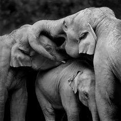 elephant love // HAATI CHAI ~ With optimal health often comes clarity of thought. Click now to visit my blog for your free fitness solutions!