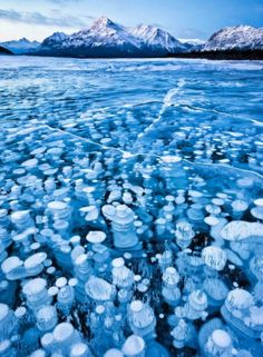 """It's an amazing natural sight at Abraham Lake the Frozen bubbles under the ice.The explanation of the rare phenomenon is: """"The plants on the lake bed release methane gas and methane gets frozen once coming close enough to much colder lake surface and they keep stacking up below once the weather gets colder and colder during [the] winter season."""" Photo by Chip Phillips"""