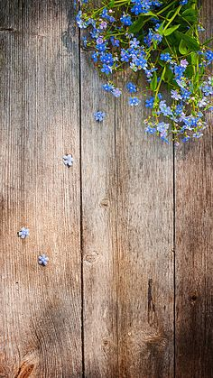 1 million+ Stunning Free Images to Use Anywhere Flower Background Wallpaper, Framed Wallpaper, Flower Wallpaper, Screen Wallpaper, Cute Wallpaper Backgrounds, Pretty Wallpapers, Flower Backgrounds, Summer Wallpaper, Colorful Wallpaper