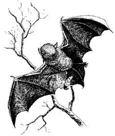 Illustration of bat catching moth