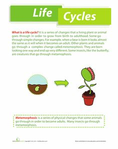 angiosperm life cycle teaching botany pinterest life cycles and life. Black Bedroom Furniture Sets. Home Design Ideas