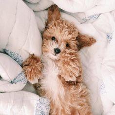 #cutestdogsandpuppies