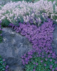 Rock star plants for rock gardens...great site. Explains different types of rock garden plants,like carpet, spreader, tuft, cushion etc., gives zones, uses etc.