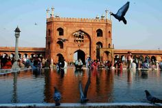 Pigeons cool themselves from heat by dipping in the well at Jama Masjid. Jama Masjid Delhi, India Travel Guide, Visit India, India People, India Tour, Historical Monuments, Old City, Incredible India, Mosque