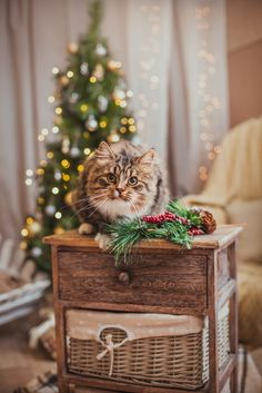 Dr. Ernie Ward recounts how an unexpected feline reveals the true meaning of Christmas to someone desperate to impress, rather than connect, with her family.