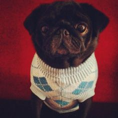 Blue winter jumper at www.ilovepugs.co.uk in sizes S-XL post worldwide