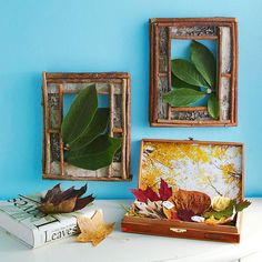 Leaf Frames : Frames are great, leaves not so much. I could use my walnut trees instead.