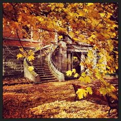 Fall had come and gone. #vandygram #fall #leaves #nashville  HARRAS ZAID