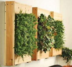 wall planters by carmel1822