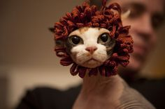 Little Lion Cat