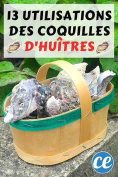 You don't know tips on how to recycle your oyster shells? It's true that after consuming oysters, the shells all … Oyster Shells, The Make, Permaculture, Garden Planning, Oysters, Gardening Tips, Finding Yourself, Technology, How To Plan