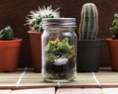 Closed terrarium in front of cacti