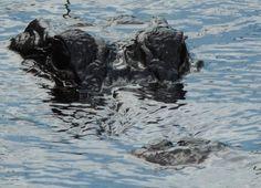 Alligator in Shark Valley, Florida Florida, Shark, Lion Sculpture, Statue, Sharks, Sculptures, Sculpture