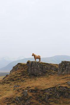 icelandic horse, near jökulsárlón, iceland