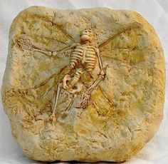 Fossilized fairy brought by artist Tony Rice. I'm surprised there aren't tooth marks on the bones from the Fae's well known cannibalism.