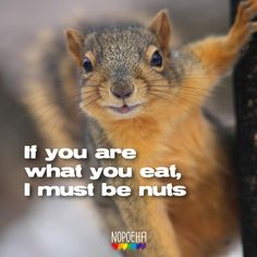 If you are what you eat, I must be nuts