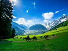 Kashmir ,INDIA .