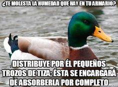 31 consejos de El pato Consejero - Taringa!